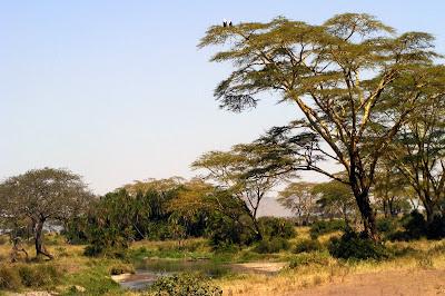 Serengeti Oasis in Tanzania by JoseeMM
