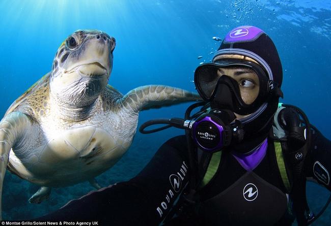 fotos de tortugas marinas
