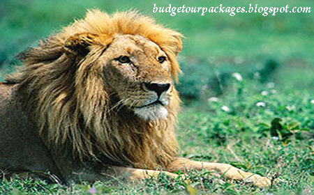 India Tours - Golden Triangle with Wild Life Luxury Tour