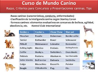 CURSO DE MUNDO CANINO