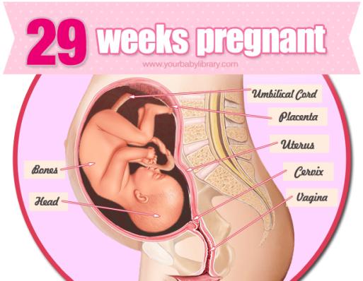 hvor mange dage er man gravid dating in denmark