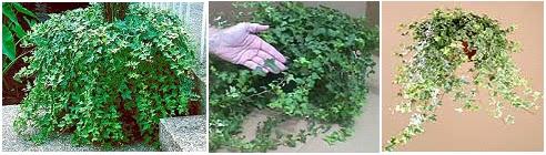 Xananatura plantas purificadoras del aire ii Plantas limpiadoras de aire