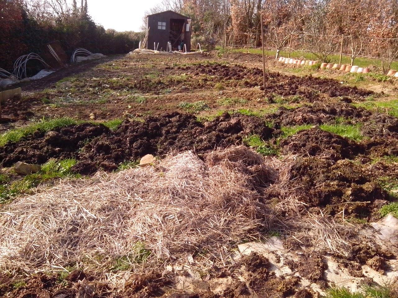 Le potager des violettes mars 2015 - Cuisiner les choux de bruxelle ...
