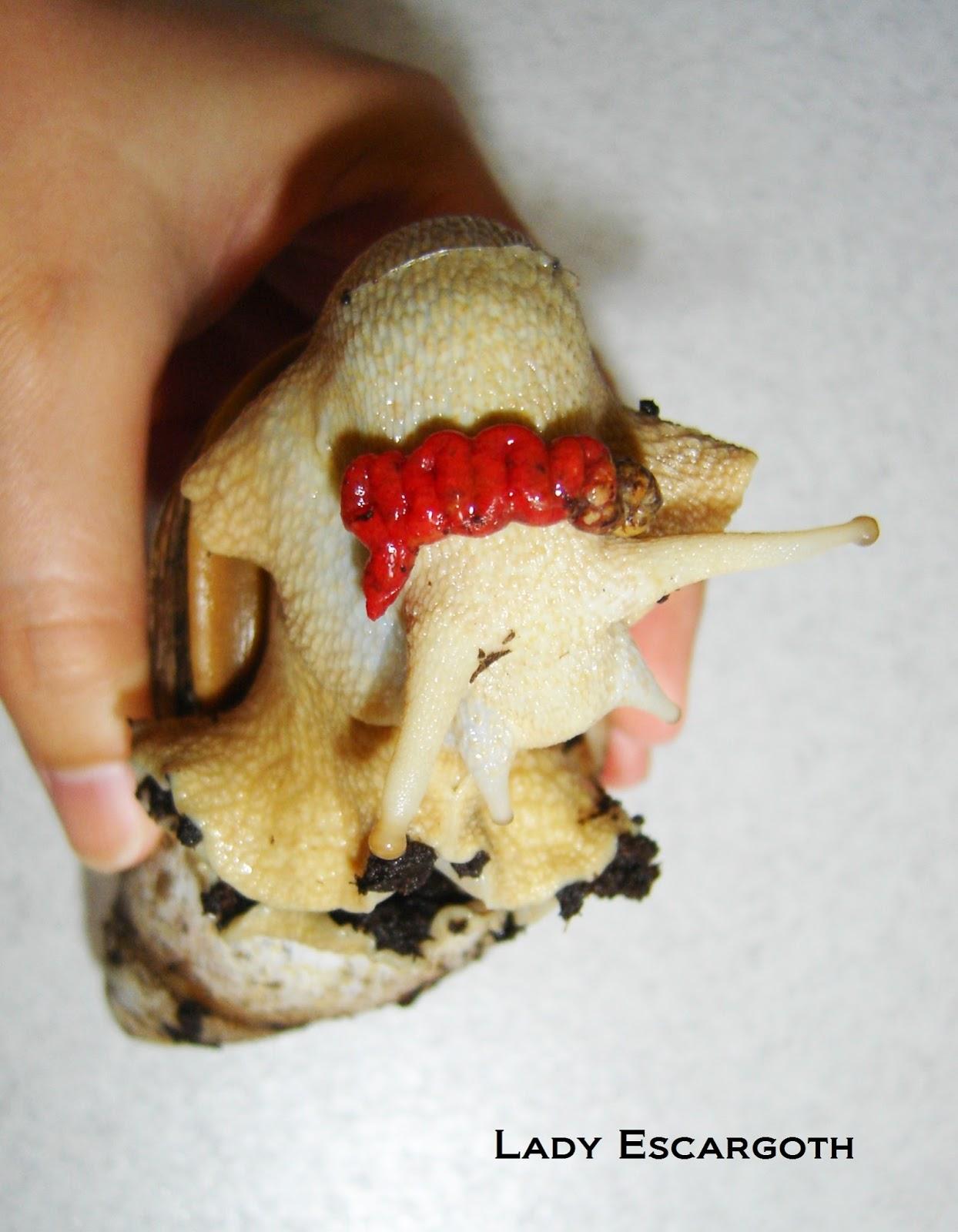 caca escargot