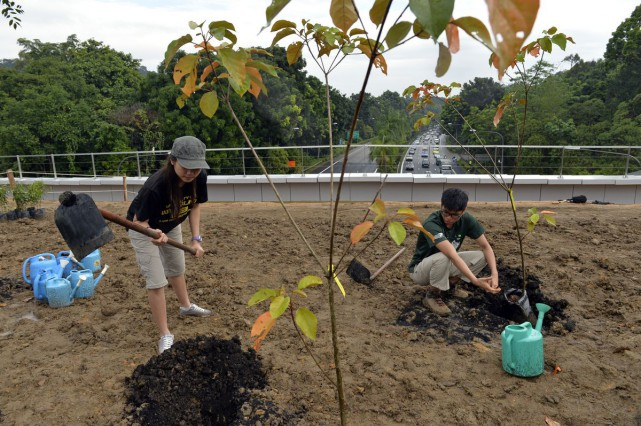 Since 2013, NParks has worked with the community, including student groups, to carry out projects such as animal surveys, and plant more than 3,000 native flora on the bridge.