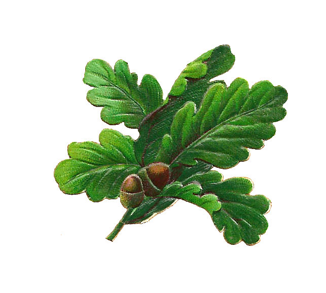 Acorn Leaf Clipart Leaves and acorns digital