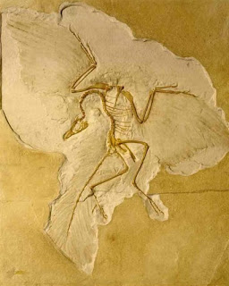 Archaeopteryx asphyxiation? Author unknown, fair use