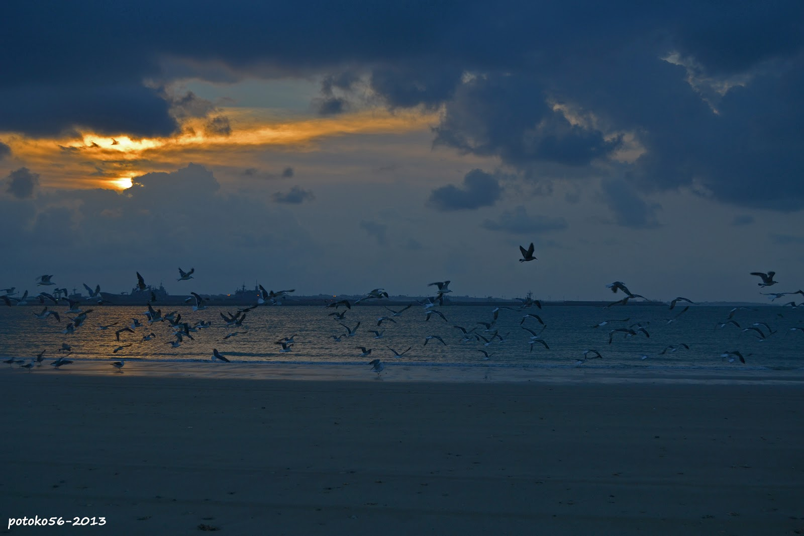 Playa del Chorrillo gaviotas volando sobre la orilla Rota