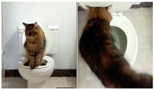 cat keeps getting in and out of litter box