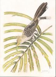 Aves Brasileiras (Birds Of Brazil)