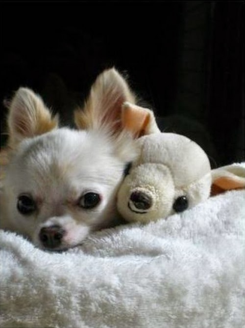 adorable animals with toy versions-8
