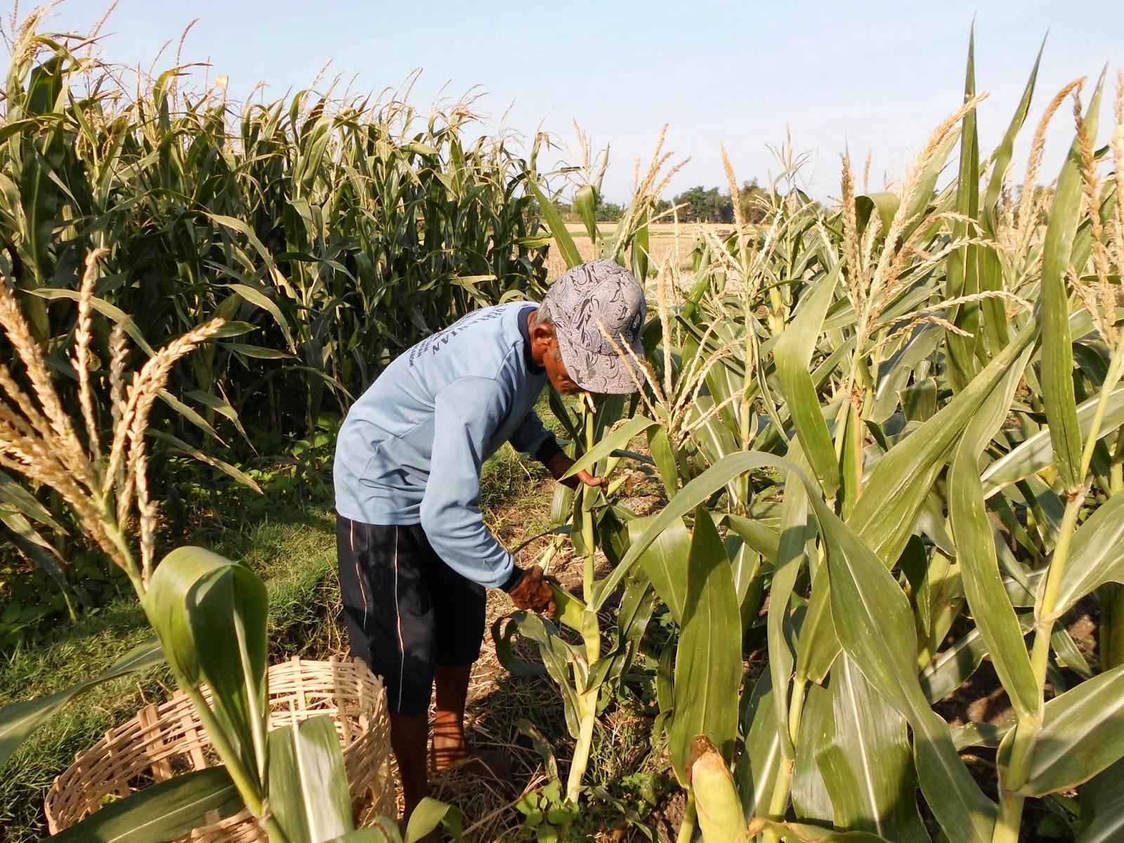 undang-undang pertanian