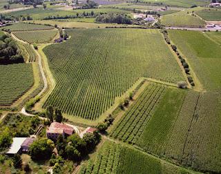 Плантации винограда в Бардолино, в районе озера Гарда
