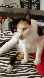 Isla Mujeres Cats Need Help
