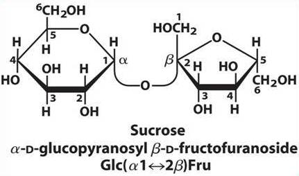 Difference between Reducing and Non-reducing sugars ~ Biology ...