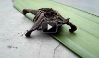 Descubre los 5 insectos más raros que he encontrado en Youtube
