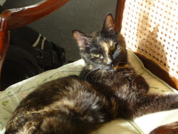 Miss Kitty 1995-2011