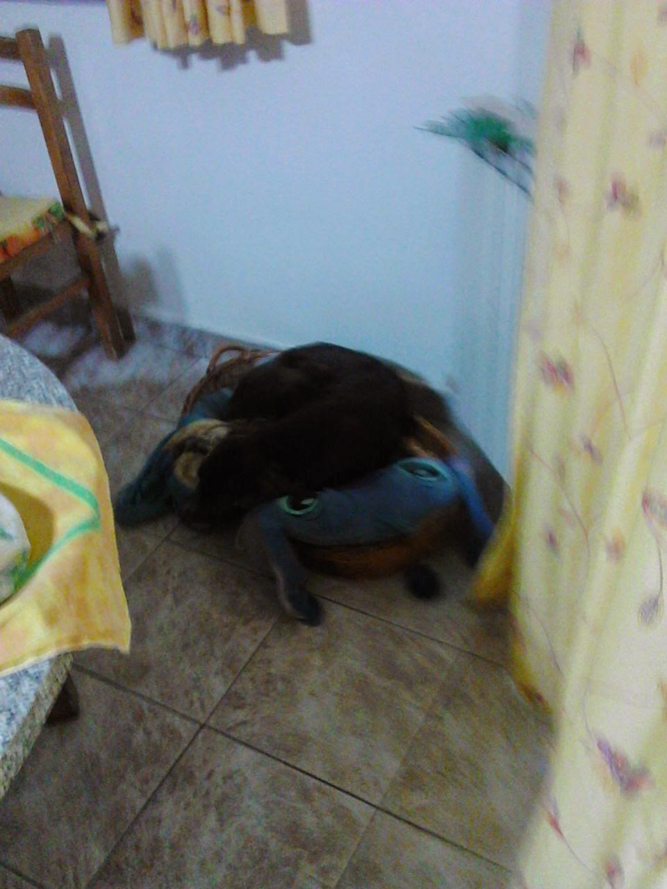 cane-nella-cuccia