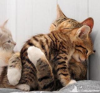 My Page ::: saya pencinta kucing !!!