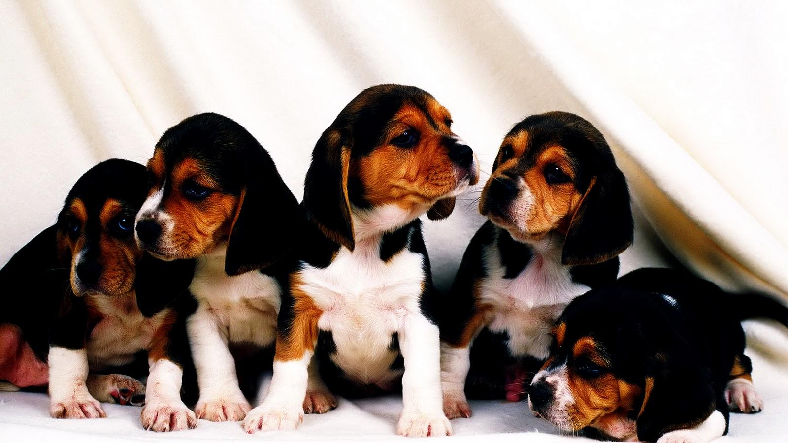 http://3.bp.blogspot.com/-qp9kTFcHeiM/TxICkdNINsI/AAAAAAAAAVM/xQEZlTR7RA4/s1600/Sweet_Puppy_Brothers_Cute_HD_Wallpaper-Vvallpaper.Net.jpg