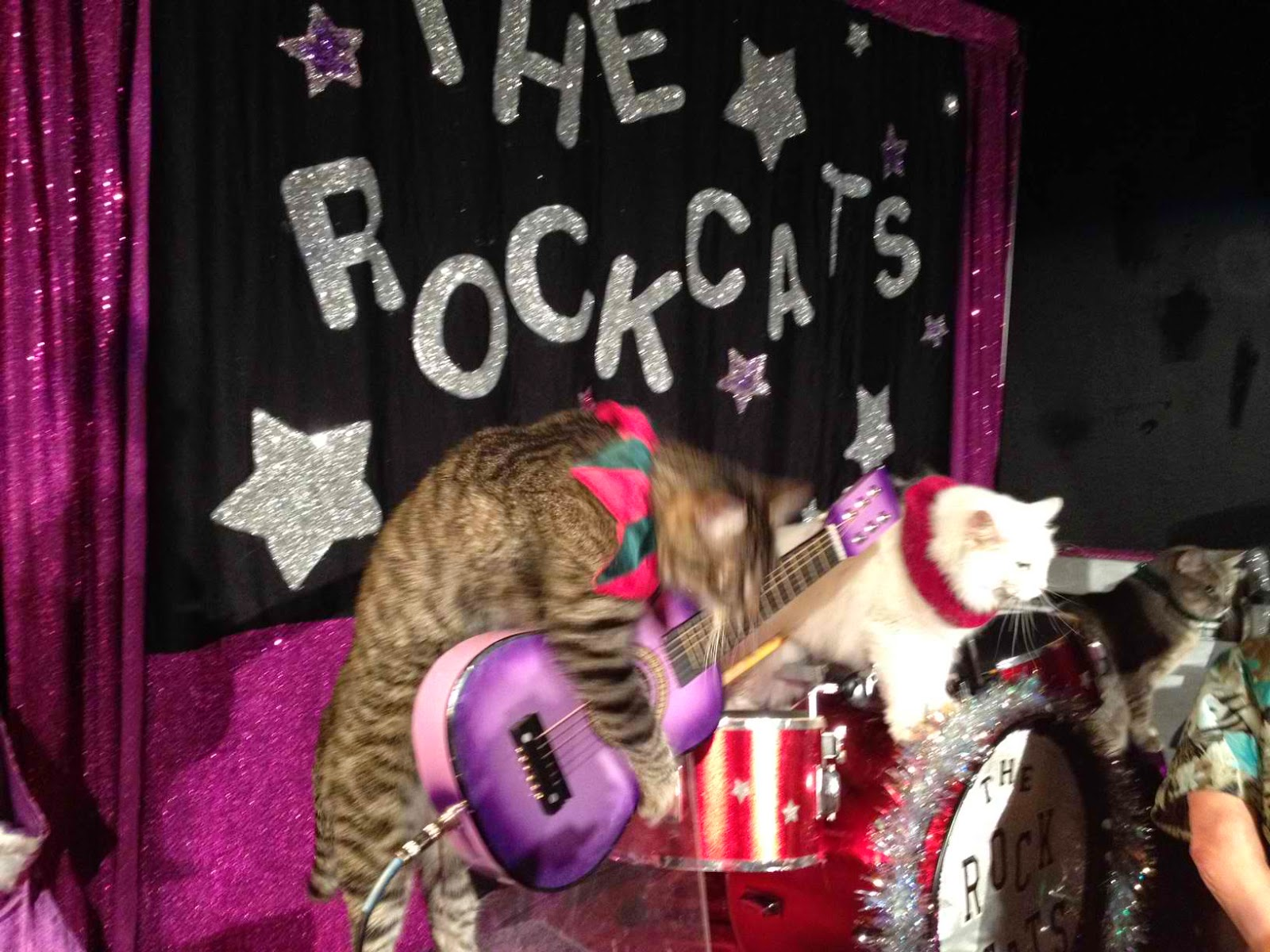 "The amazing ""Rock Cats"""