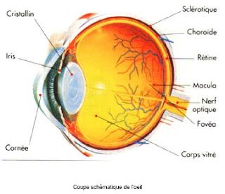 Les oedèmes sur les yeux comme se délivrer