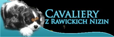 Hodowla Cavaliery z Rawickich Nizin