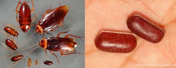 Legend cockroach lick urban envelope