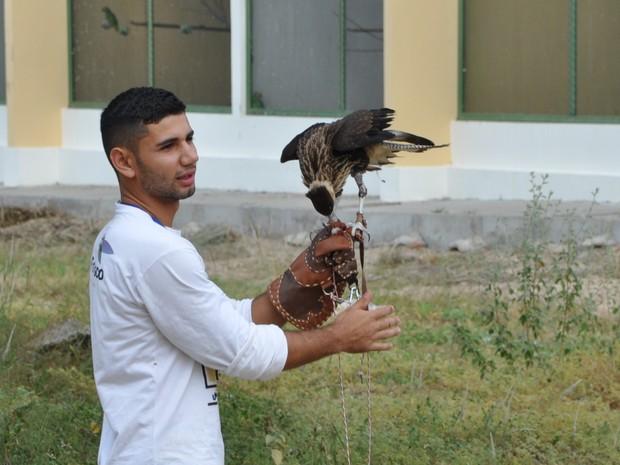 Falcoaria é usada para desenvolver as capacidades das aves em recuperação (Foto: Jaquelyne Costa/Cemafauna)