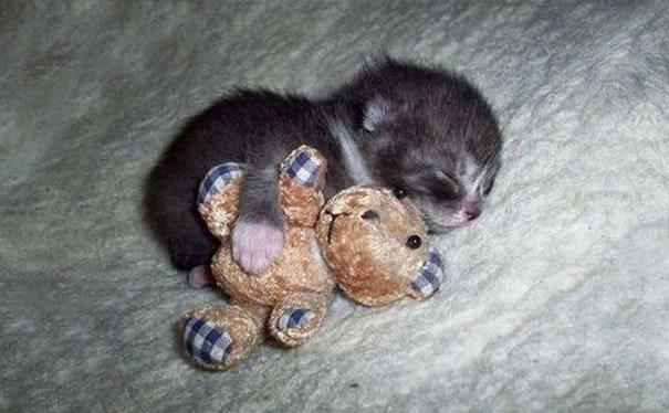 adorable puppies sleeping5