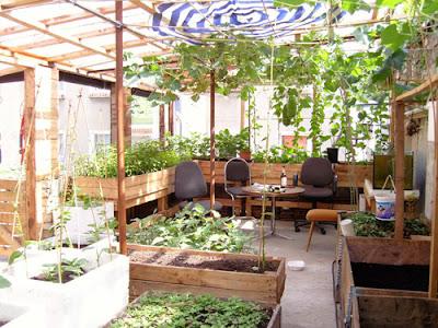 Vườn rau trong nhà đẹp, đơn giản