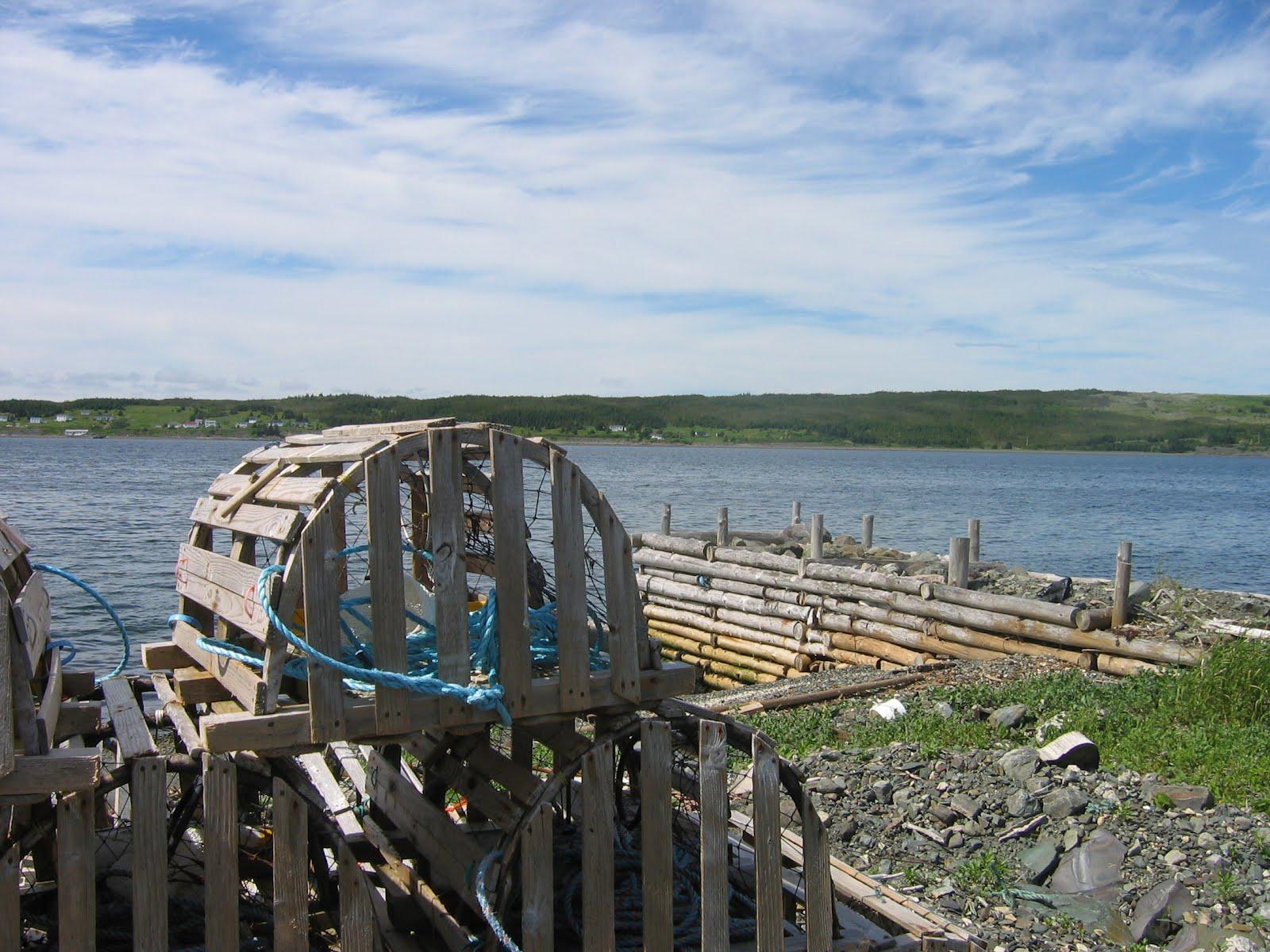 series   My Newfoundland    I A Newfoundlander Born And Bred