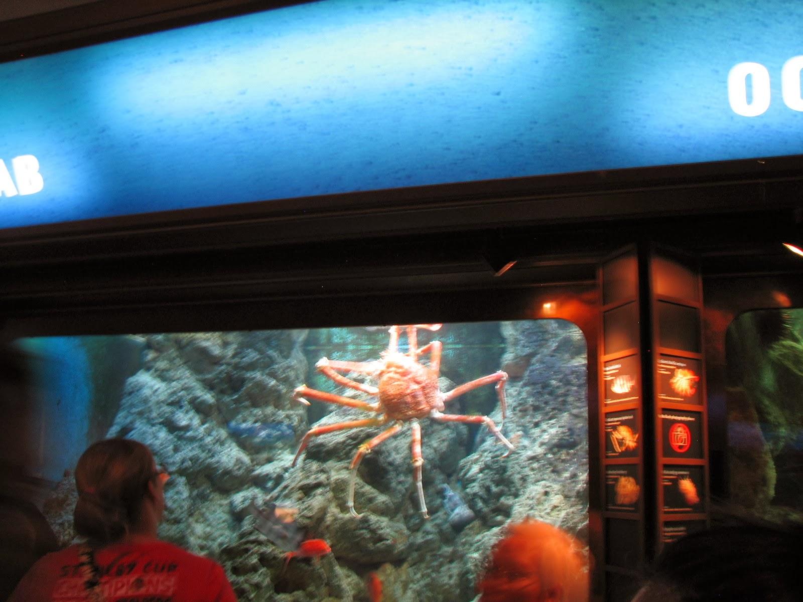 Sporktastic Travel Chicago Shedd Aquarium