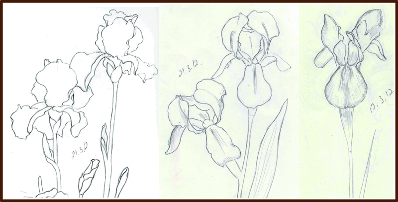 Weekly  Doodles and tuts Drawing an Iris flower