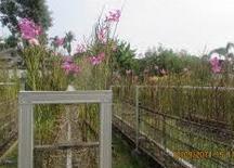 Taman Anggrek Sri Soedewi
