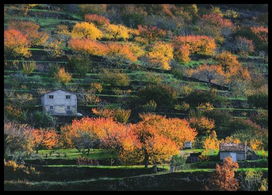 X Concurso Fotográfico de la Otoñada del Valle del Jerte