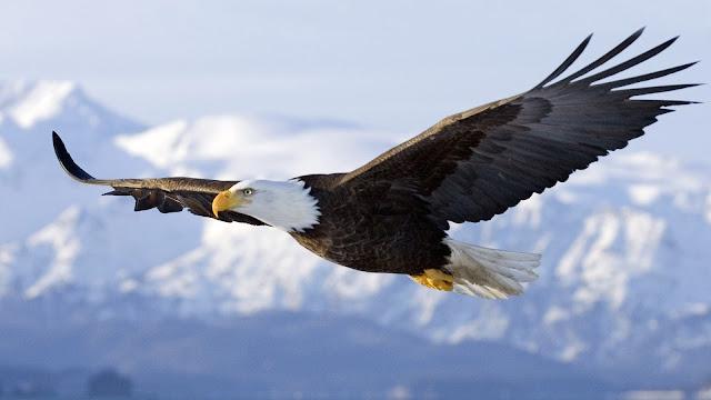 تعلم الطيران من سلوك الطيور