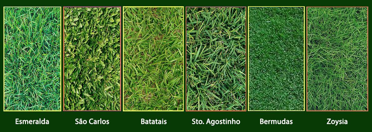 grama sintetica para jardim em curitiba:Grama do Lami: Conheça o tipo de grama mais adequado para cada jardim