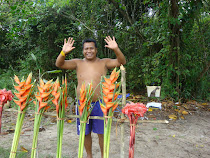 Venda de plantas tropicais