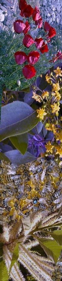 Karnİyol arısı ve kestane balı