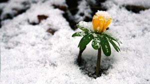 Fotos de flores en invierno - flor amarilla