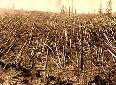 Árboles derribados por la explosión.