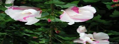 Couverture journal facebook fleurs de printemps