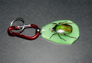 Escarabajo Verde. Coleóptero Disecado, Fluorescente