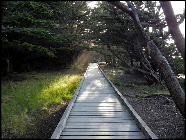Boardwalk in MacKerricher State Park in California