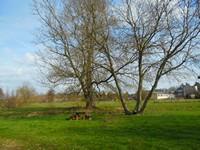 Etang de Chouzy-sur-Cisse : une aire de pique nique sous les arbres