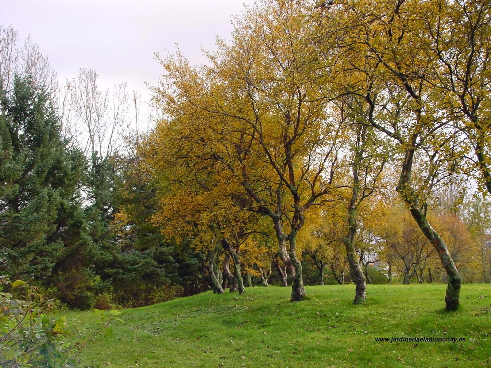Jardineria eladio nonay planificaci n del jard n - Jardineria eladio nonay ...