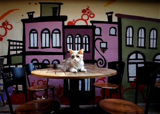 Cat from Kaktus Cafe in Istanbul Turkey