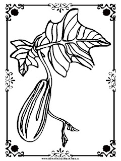 gambar ketimun untuk diwarnai