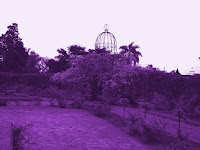 violet rosedal Artistic pic